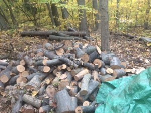 Piles of wood waiting patiently to be split